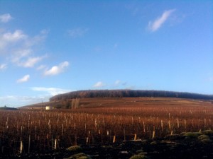 The famed Hill of Corton